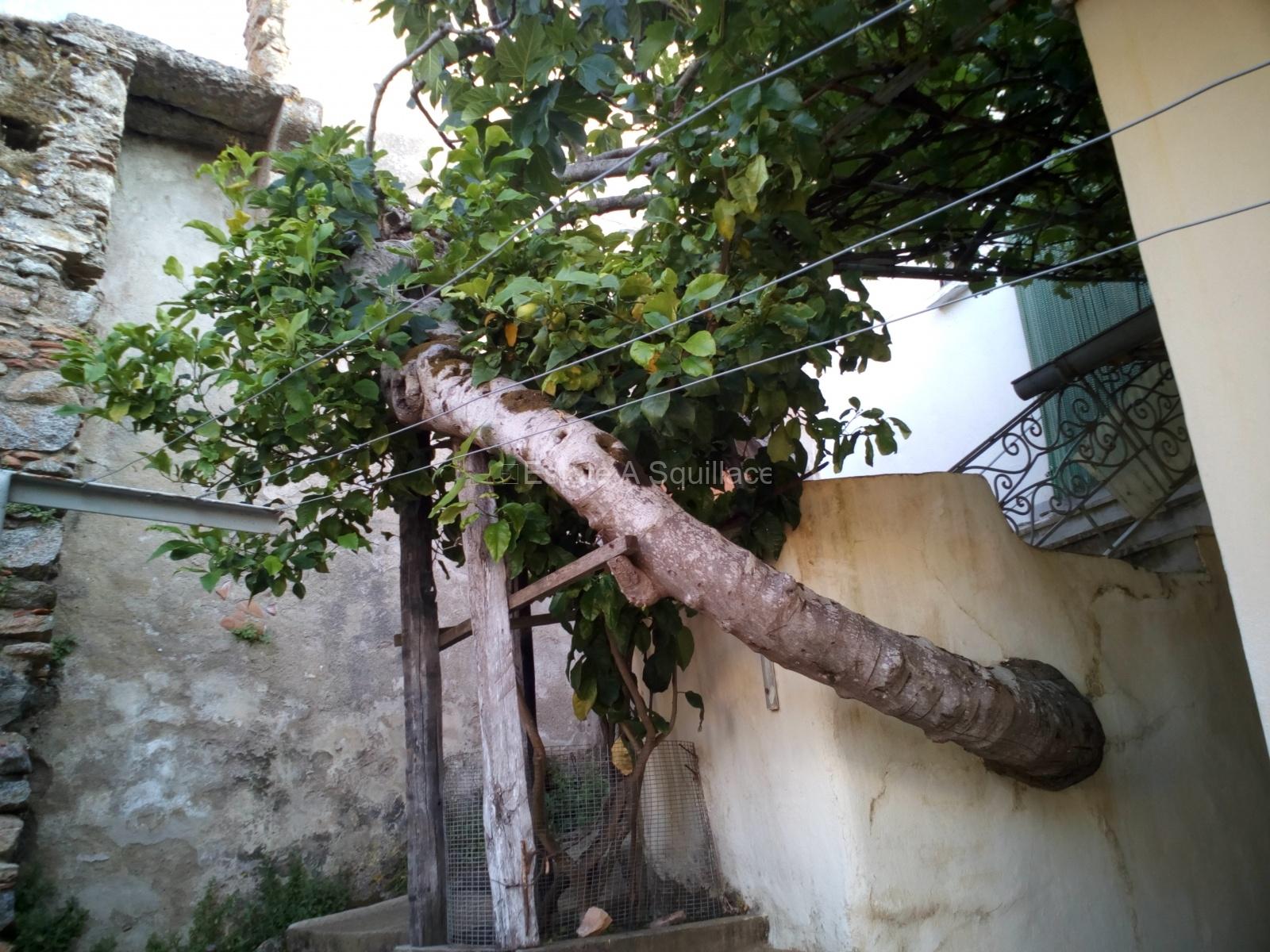 55 - Squillace borgo: fico dal muro